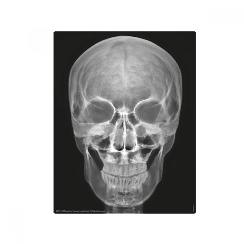 Набор 4M Юный врач. Скелет человека 00-03375